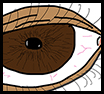 Eye Anatomy Featured Image